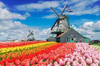 Dutch Bulbfields and Windmills