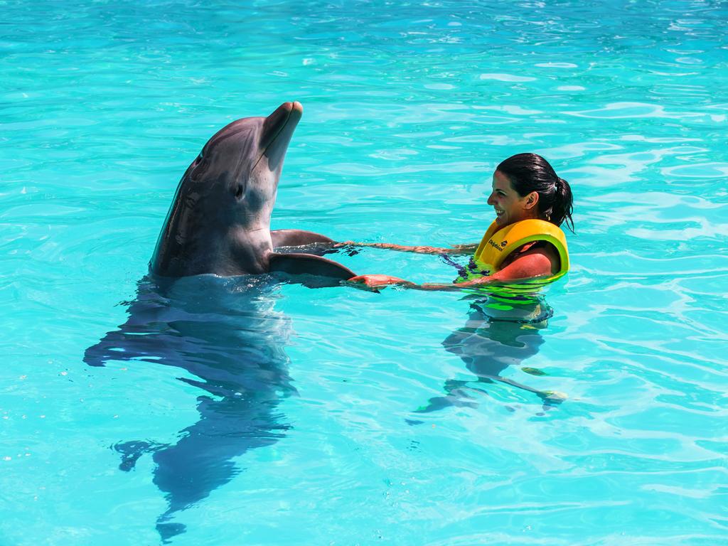 Delphinus Interactive Aquarium