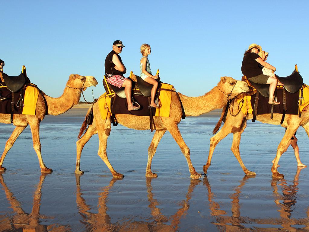 Camel rides at the Souss-Massa National Park