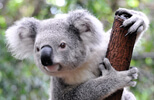 Australasia escorted tours