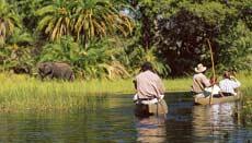 River excursion viewing elephants