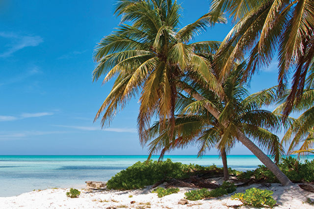 Miami Stay and Western Caribbean
