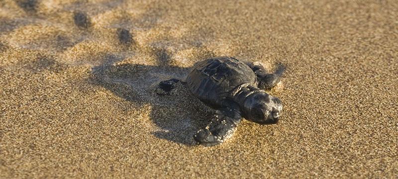 The Lara Bay Turtle Conservation Station